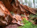 West Fork Oak Creek Canyon