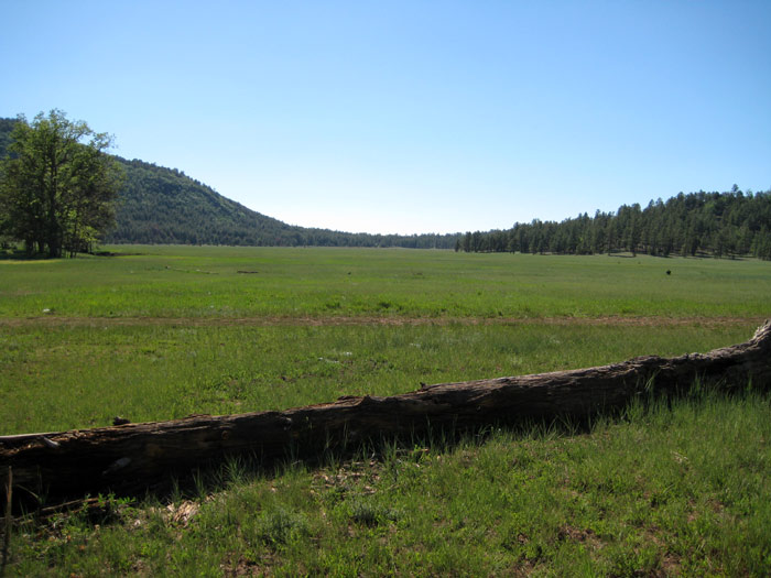The forest meadow east of Apache Maid Mountain