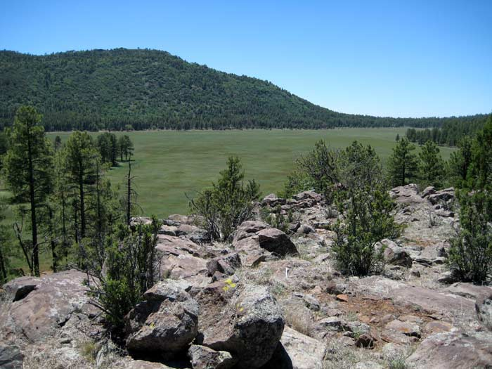 A forest meadow next to Apache Maid Mountain
