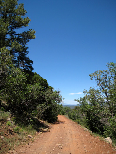 Mountain biking down the Apache Maid Mountain Road after enjoying the views from the summit