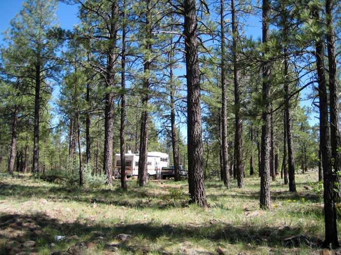 RV boondocking among a ponderosa pine forest east of Apache Maid Mountain off of Forest Service Road 229