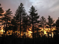 Picture of an Arizona Forest Sunset near Flagstaff, Arizona