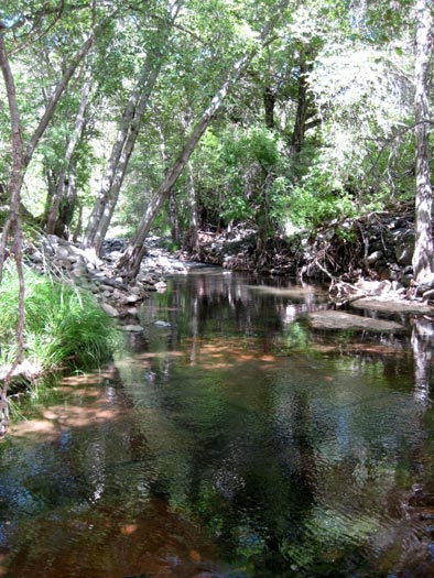Wet Beaver Creek shaded by a canopy of trees