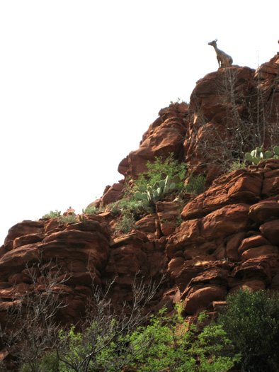 A female Bighorn Sheep atop the red rock canyon walls of West Clear Creek