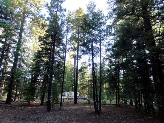 Camping near Bear Canyon Lake