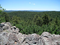 Picture of Coconino National Forest from Coulter Hill near Flagstaff, Arizona