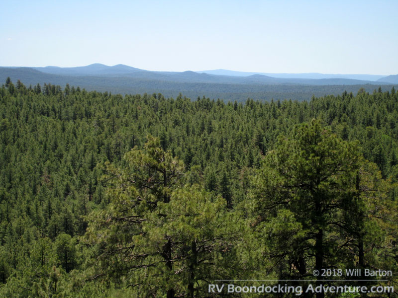 View of the Coconino National Forest from Coulter Hill (7,712 feet in elevation). Tall ponderosa pines dominate the landscape here.