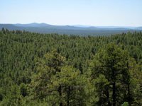 Picture from Coulter Hill of Coconino National Forest near Flagstaff, Arizona