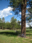Picture of Coulter Park, Arizona Near Flagstaff and South of Priest Draw