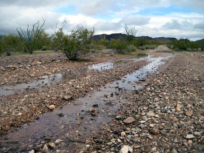 Puddles on the BLM road near my RV boondocking campsite, after a good rain shower