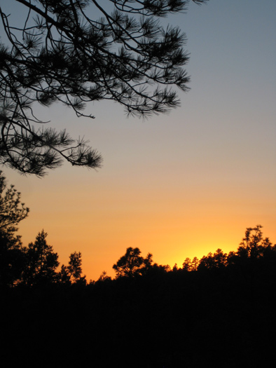 Sunset over the forest from the meadow east of Apache Maid Mountain
