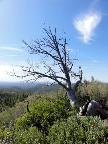 Highline National Recreation Trail, Arizona