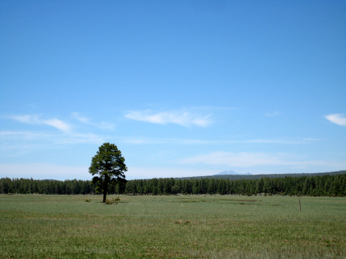A lone pine tree standing in the meadow east of Apache Maid Mountain. San Francisco Mountain (near Flagstaff) is just barely noticeable in the distance.
