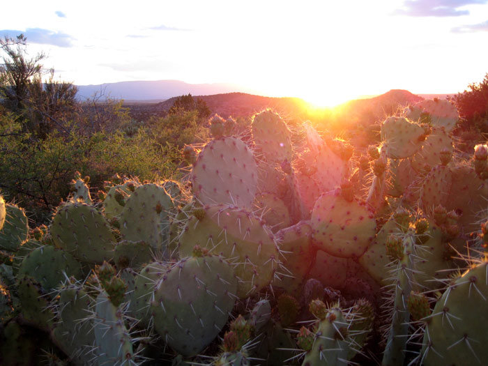 Prickly pear cactus with sunset from a hillside near Red Tank Draw. Picture taken southwest of the intersection of FR-618 and FR-121.