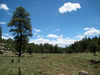 Picture of the Priest Draw Meadow South of Flagstaff, Arizona