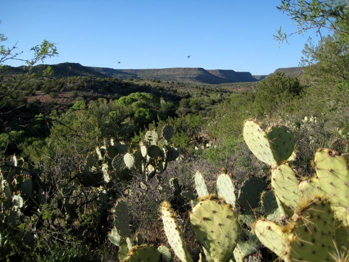 Red Tank Draw with prickly pear cactus in foreground. Picture taken southwest of the intersection of FR-618 and FR-121.