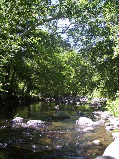 Wet Beaver Creek near the Bell Trail in Wet Beaver Wilderness