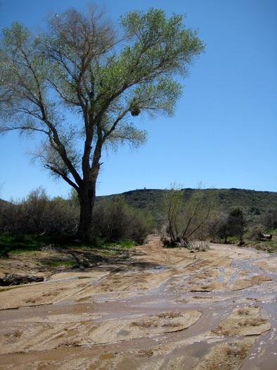 Badger Springs Wash