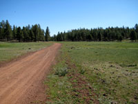 Picture of Coconino National Forest Road 236 south of Flagstaff, Arizona