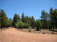 Picture of Coconino National Forest Road 700H near Flagstaff, Arizona