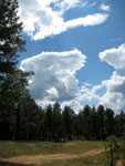 Picture of a Coconino National Forest Road south of Flagstaff, Arizona