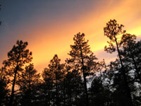 Picture of a Forest Sunset near Flagstaff, Arizona