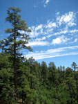 Picture of James Canyon, AZ in the Coconino National Forest near Flagstaff