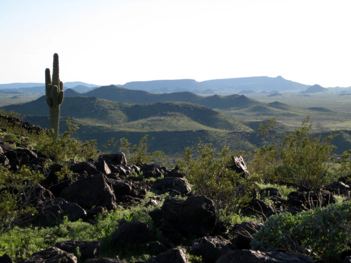 Saguaro Cactus standing tall with the Gila Bend Mountains in the background