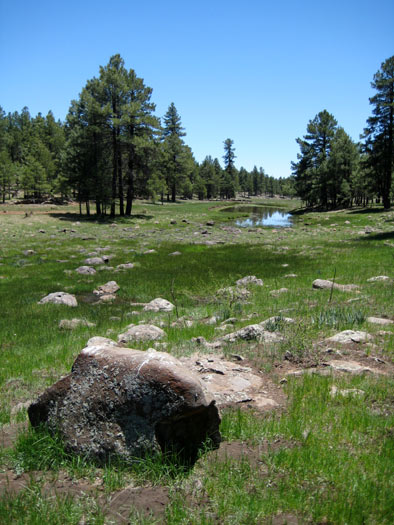 A rocky meadow near Stoneman Lake