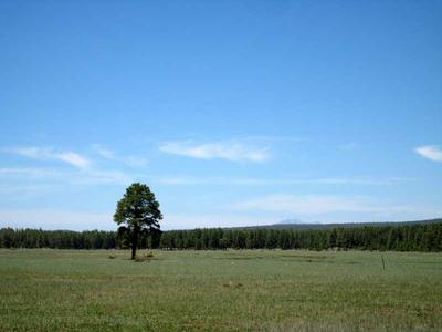A lone pine in the meadow east of the mountain