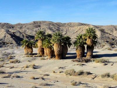 17 Palms Oasis