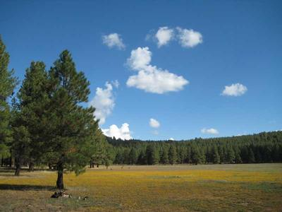 Kelly Canyon Forest Meadow