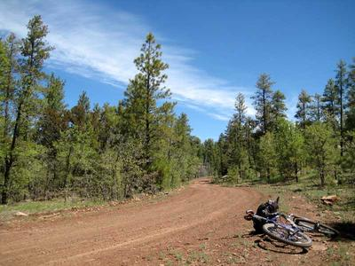 Biking on Forest Road 127 to the Lee Butte Fire Lookout