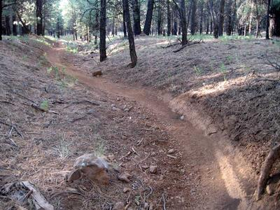 Single track dirt bike trail just south of FR 222