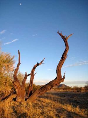 The surrounding desert has a beauty all its own