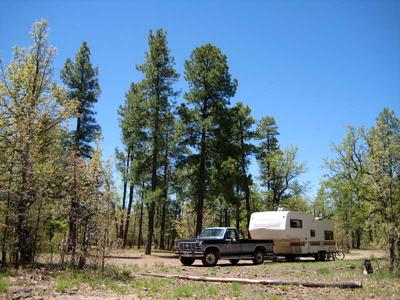 RV camping with green pines and blue skies