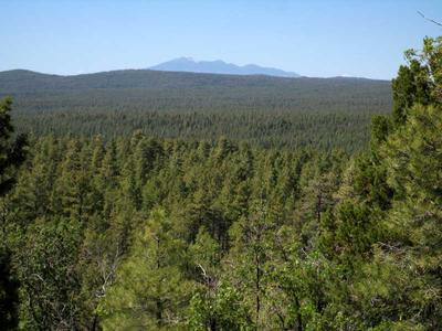 View of the expansive forest and San Francisco Mountain beyond