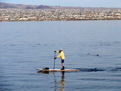 Man Paddle Boarding Lake Havasu with City in Background